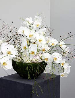 Raumschmuck mit Phalaenopsis